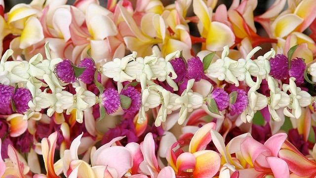 florshawaianes